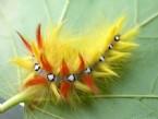 необычные животные - часть 2: насекомые на подиуме.