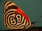 Doğanın Desenleri: Kelebekler