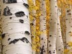 Doğanın Desenleri: Ağaçlar