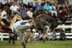 BREZILYA - Vahşi Atlar Binicilerini Üzerlerinden Böyle Attı