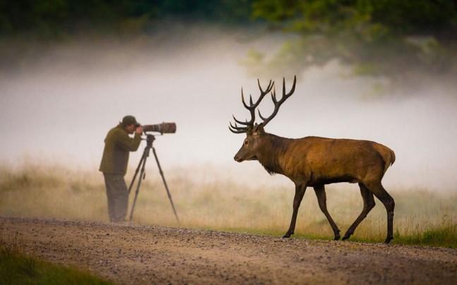 Fotoğraf galerisi doga hayvanlar alemi günün fotoğraflari 17