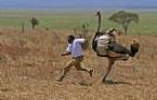 Sadece Afrika'da