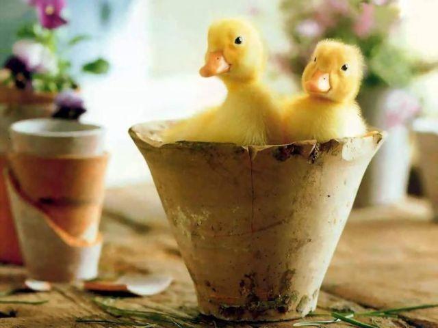 Hayvanlar alemi günün fotoğrafları 22 mart 2012