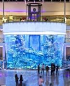 ALIŞVERİŞ MERKEZİ - 999350 Litre Su ve 3000 Balık