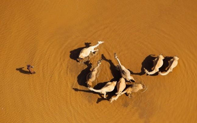 Su içen develer