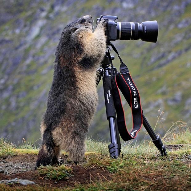 Fotoğraf galerisi doga hayvanlar alemi haftanin fotoğraflari 17