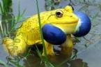 Doğanın Renkleri Fışkıran Hayvanlar