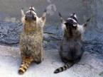 HAYVANLAR ALEMİ - Dua Eden Hayvanlar