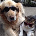 Dünyanın En Sıkı Dostluğu