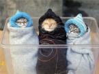Havlu Kedilerin En Şirin Halleri