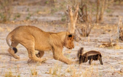 Vahşi Doğada İlginç Anlar