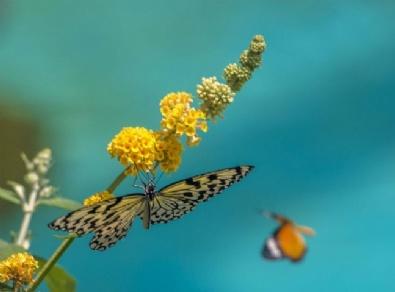 Konya Tropikal Kelebek Bahçesi