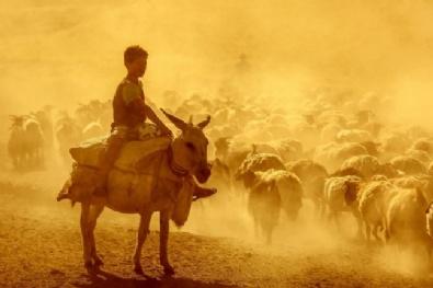NEMRUT - Sürülerin Zorlu Yolculuğu