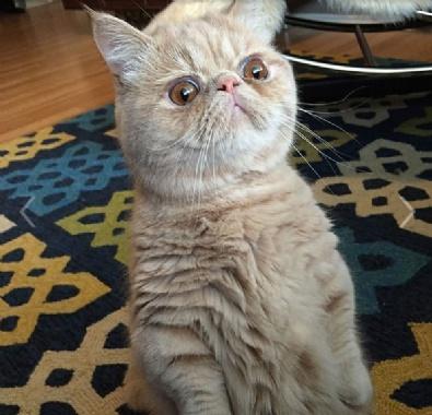 Sosyal medya bu kediyi konuşuyor