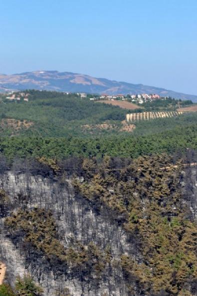 Bursa'daki Orman Yangınında Geriye Kalanlar