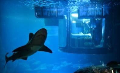 PARIS - Köpek Balıklarıyla Dolu Akvaryumda Özel Bir Gece