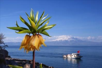 VAN GÖLÜ - Van Gölü Koylarında İlkbaharın Büyüleyen Güzelliği