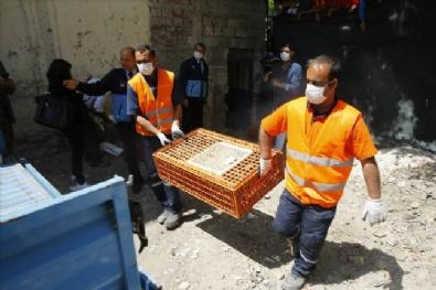 İzmir'de kaçak tavuk kesimi operasyonu