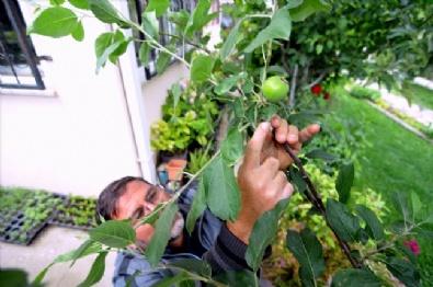 Kokteyl Gibi Meyve Ağacı