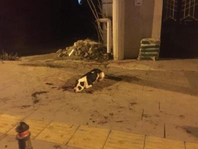 Köpekten Korkan Şahıs Sahibi İle Köpeğini Bıçakladı