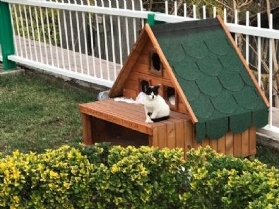 Kedi ve köpekler kışı 'ev'lerinde geçirecek