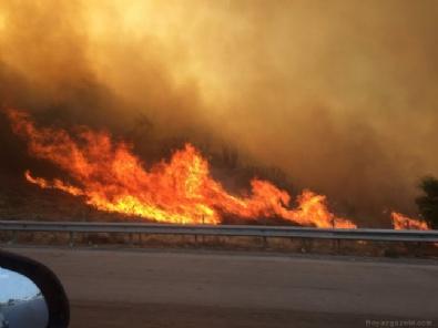 POLİS - İzmir Güzelbahçe'de orman yangını!