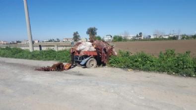 Adana'da Kesilmiş At Ve Eşek Eti Bulundu