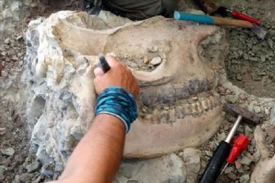 Çankırıda 8,5 Milyon Yıllık Fosil Bulundu!