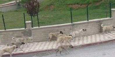 Sokak Köpeklerinin Saldırdığı Yaşlı Kadın Öldü