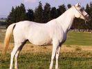 Ev fiyatına yarış atları