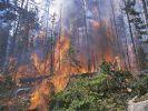 Kocaeli'deki orman yangını devam ediyor