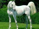 Atlara 5 yıldızlı hizmet