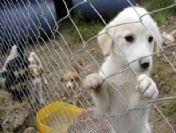 Kula Belediyesi Sokak Köpeklerini Aşılama Ve Kısırlaştırma Kampanyası Başlatıyor