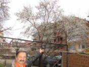 Küresel Isınma, Simav'da Ağaçları Şaşırttı