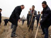 Iğdır'da 10 Bin Badem Tohumu Toprakla Buluştu