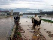 İzmir'de Yağmur Su Baskınlarına Neden Oldu