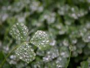 Düzce'de Yağmur Güzelliği