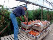 Isparta Doğrudan Yaş Sebze-meyve İhraç Edebilecek