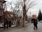 Odunpazarı Belediyesi Ağaç Budama Çalışması Yaptı