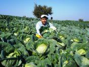 Organik Sebze Yetiştirdi