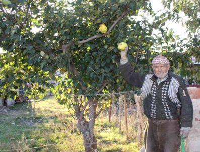 OSMAN TORUN - Gökçeler Köyü Sakinlerinden Ali Osman Torun: