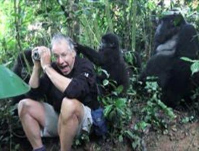 ANDERSON COOPER - Vahşi gorilden turiste hoşgeldin !
