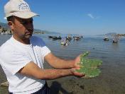 Bafa Gölü'nde Ekolojik Soruna Çözüm Arayışları