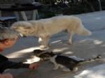 ZEYNA - Fethiye De Kedi Köpek Dostluğu