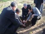 Armutlulu Çiftçilere 6 Bin 500 Goji Berry Fidanı Dağıtıldı