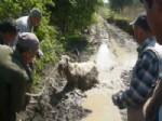 DAVULGA - Köylülerin Eşek Kurtarma Operasyonu
