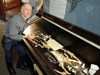 Yeni Zelanda'da Dev Penguen Fosili Bulundu