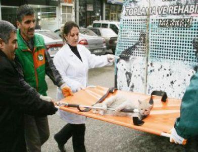 Yaralı Kediyi Duyarlı Vatandaşlar Fark Etti, Belediye Sahip Çıktı