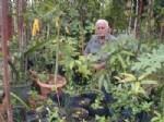 BALKI - Alanya ve Gazipaşa'da Tropikal Meyveler Yetiştirilecek