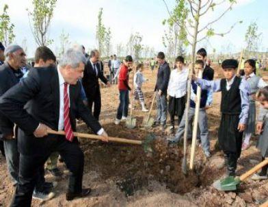 Hereke de eski maden ocağı alanı ağaçlandırıldı